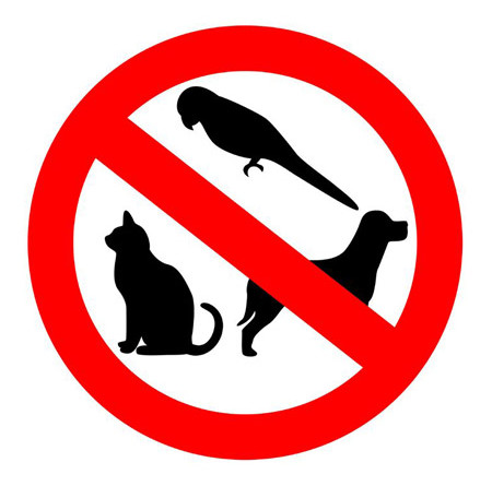 Image result for no pet cat